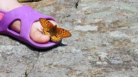 Närbilden en härlig orange bergfjäril virvlar och flyger över ett ben för barn` s i sandaler fjärilen sitter på arkivfilmer