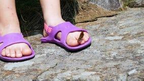 Närbilden en härlig orange bergfjäril virvlar och flyger över ett ben för barn` s i sandaler fjärilen sitter på stock video
