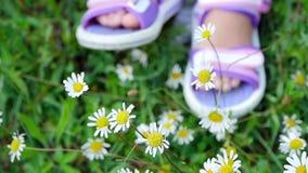 Närbilden på en kamomilläng, på gräset, där är fot för barn` s i rosa sandaler arkivfilmer