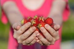 Närbilden räcker hållande nya jordgubbar royaltyfri fotografi