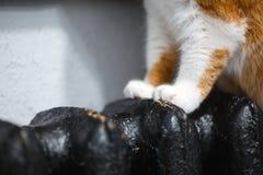 Närbilden röd vit tafsar av katt på det svarta elementet fotografering för bildbyråer