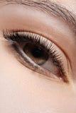 Närbilden synar med danar det ljusa sminket, långa ögonfranser Royaltyfri Bild