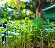 Närbildfält växer grönsaker royaltyfria bilder