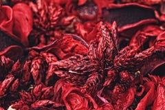 Närbildfoto av färgrikt parfymerat potpurri royaltyfri bild