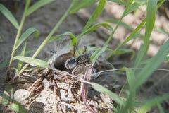 Närbildfoto av spindeln Royaltyfria Foton