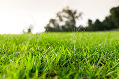 Närbildgräsjordning Royaltyfri Fotografi