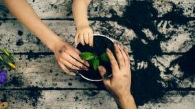 Närbildhänder av en familj som trycker på sidorna på en blomma, som har precis planterats arbeta i trädgården för begrepp stock video