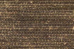 Närbildkattscratcher som göras av kartongen Arkivbild