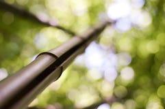 Närbildmakroen av bambustammen parkerar in skogen arkivfoton