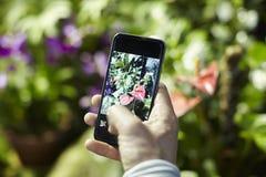 Närbildmanhänder som tar fotoet vid telefonen i en loppresa, gröna växter i en parkera Fokuserat på telefonskärmen arkivfoto