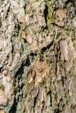 Närbildsikt av det högt detaljerade trädskället Arkivbilder