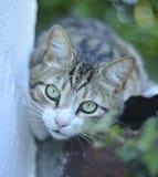 närbildsikt av en katt Arkivfoto