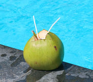 Närbildsikt av kokosnöten med att dricka sugrör Arkivbild
