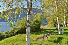 Närbildsikt till träd för vit björk och en bänk på den Garlate lakefronten i en solig höstdag royaltyfria bilder