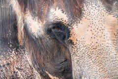 Närbildstående av den indiska elefanten fotografering för bildbyråer