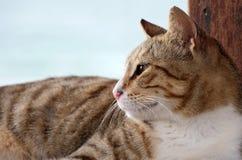 Närbildstående av den randiga inhemska katten för grå färger arkivfoton