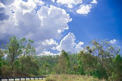 Närliggande Brisbane för träd stad i Queensland, Australien Australien är en kontinent som lokaliseras i den södra delen av jorde royaltyfri fotografi