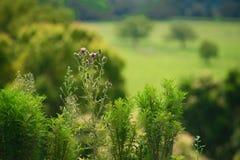 Närliggande Brisbane för växter stad i Queensland, Australien Australien är en kontinent som lokaliseras i den södra delen av jor fotografering för bildbyråer