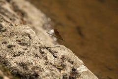 Närliggande slända en flod Arkivfoto