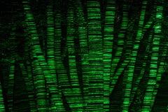 Närvaro av träd på natten tack vare en gräsplanlaser Royaltyfria Bilder