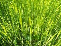 Nästan gräsplanen Royaltyfri Foto