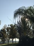 Nästan solnedgångbild som presenterar olika sorter av träd arkivfoto