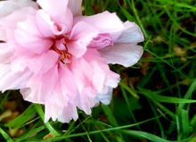 Nästan springflowers Royaltyfri Fotografi