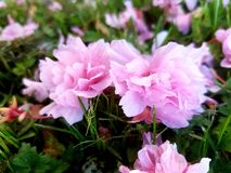 Nästan springflowers Arkivbild