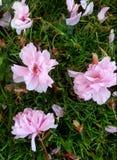 Nästan springflowers Arkivfoton