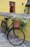 Nätt antik cykel med blommakorgen Fotografering för Bildbyråer