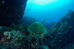 Nätt baksida av en havssköldpadda Arkivbild