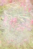 Nätt blom- texturerad bakgrund Royaltyfri Foto