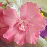 nätt blomma Royaltyfria Foton