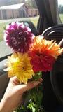 Nätt blommor royaltyfri fotografi