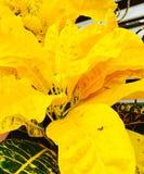 Nätt blommor Royaltyfri Foto