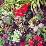 Nätt blommor Arkivfoton