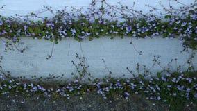 Nätt blommor Arkivfoto