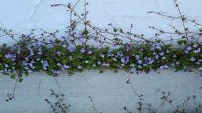 Nätt blommor Fotografering för Bildbyråer
