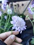 Nätt blommor Royaltyfria Foton