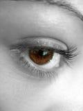nätt brunt öga Royaltyfria Foton