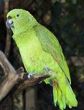 nätt fågel Arkivbild