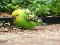Nätt fågel 2 Arkivbilder
