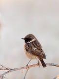 Nätt fågel på naturen Fotografering för Bildbyråer