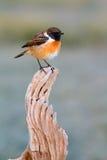 Nätt fågel på naturen Arkivfoto