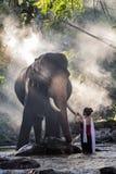 Nätt flicka i traditionella thai dräkter som trycker på elfenben för elefant` s Arkivbilder