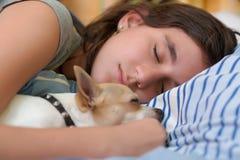 Nätt flicka som sover med hennes chihuahuahund Arkivbilder