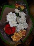 Nätt guling och röda och vita blommor fotografering för bildbyråer