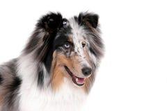nätt hund arkivfoton