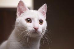 nätt katt Royaltyfri Foto