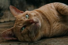 Nätt katt och dina gröna ögon arkivbild